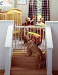 North States Stairway Swing Pet Gate/Child Gate