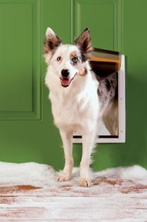 PetSafe Extreme Weather Dog Door - Medium