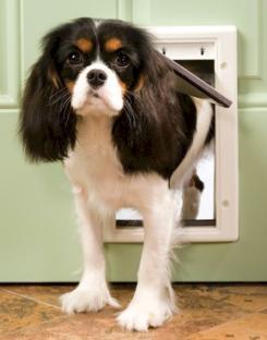 PetSafe Plastic Dog Door