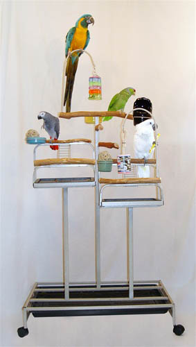 Mango Pet Deluxe Foraging Station playstand for birds
