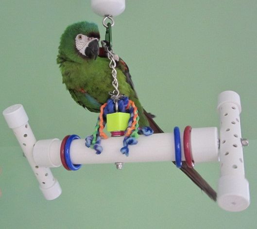 Parrot Party Bird-Bone with Jingle Forever Bird Toy