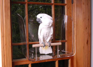 Cockatoo on large Wingdow Seat for birds