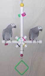 Parrot Party Medium T-Toy Forever Bird Toy
