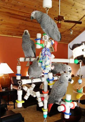 Kitchen Sink pet bird playgym
