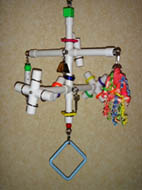 Kitchen Sink 4-perch Hanging Playgym for Medium-sized Birds