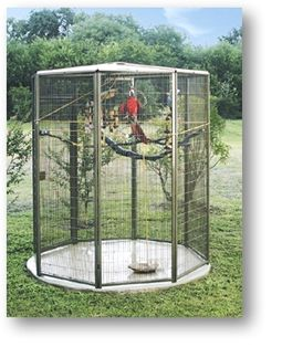Outdoor Aviary with Macaw