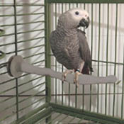 Thermo Heated Perch for Pet Birds