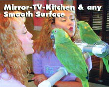 Polly Pet Products Window-Shower Perch - mirror view