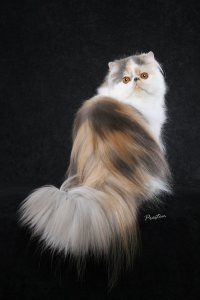 Feline information, resources, cat care products, find cat breeders
