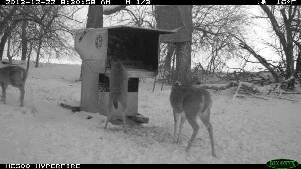 Wilderness Calls | Deer Feeders, Wild Hog Traps - Gravity