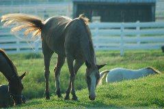 LOCAL HORSE TRANSPORT
