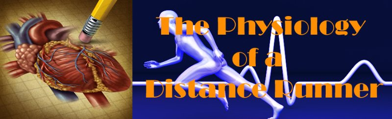 Distance running physiology
