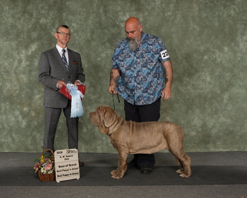 1st show 6 months old Best of Breed Best in Working Group Puppy