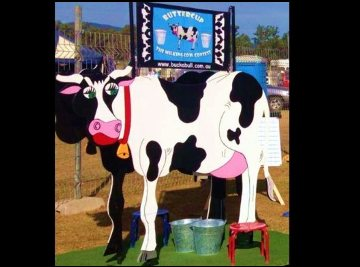 MILKING COW CONTEST