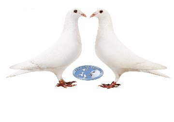 WhitePigeonSales Com - White Racing Homing Pigeons - Home
