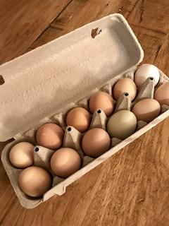 I have fresh eggs, now what???