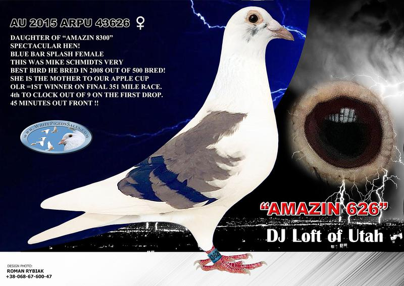 WhitePigeonSales Com - White Racing Homing Pigeons - Colored