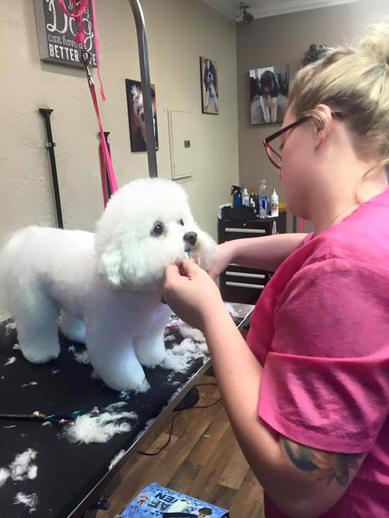 Pet Industry Insurance - Dog Groomer