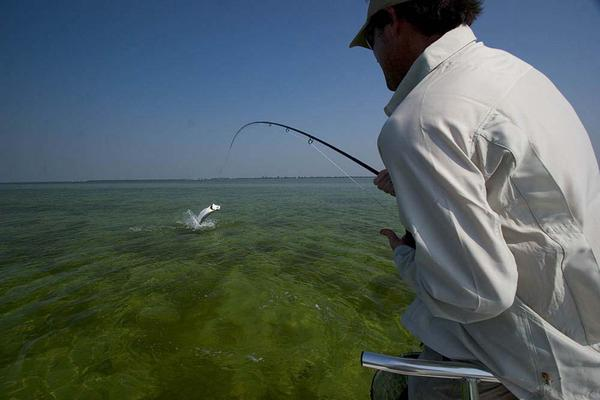 Fly Fishing for tarpon in the Florida Keys: Fish On!!!