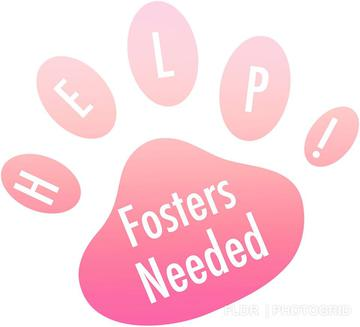 Florida Little Dog Rescue Group - Home