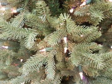Kawartha Spruce