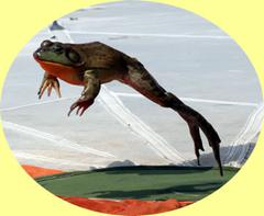 Valley City Ohio frog jump contest and festival