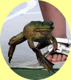 Valley City Ohio frog jump contest and festival 2020.