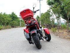 DongFang (50CC :: 3 Wheel Trike   Motor Scooter - FREE SHIPPING ( DF 12568 )